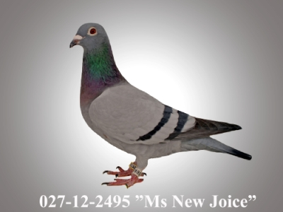 "027-12-2495 ""Ms. New Joice"""