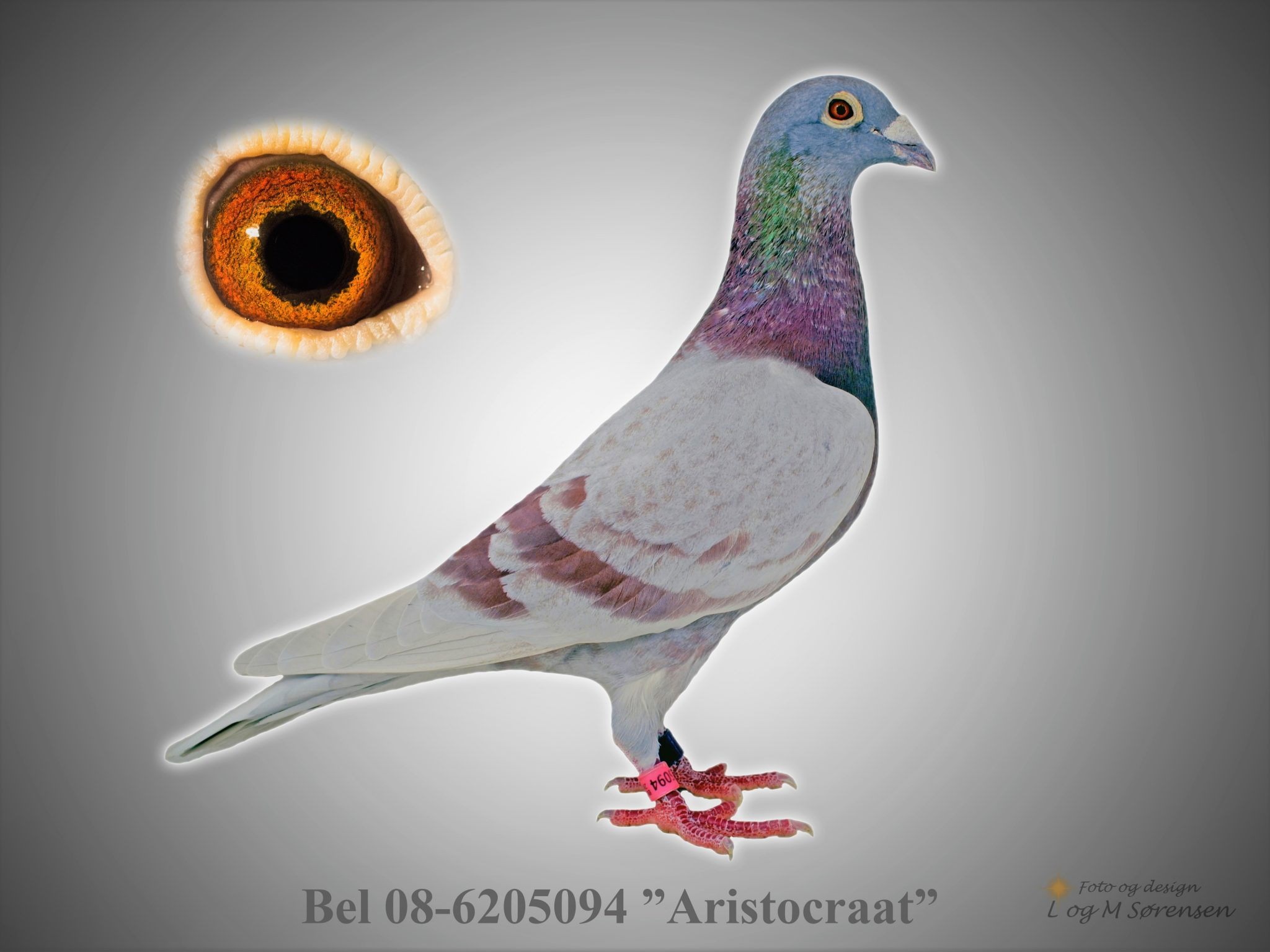 "Rede 17 Bel 08-6205094 ""Aristocraat"""