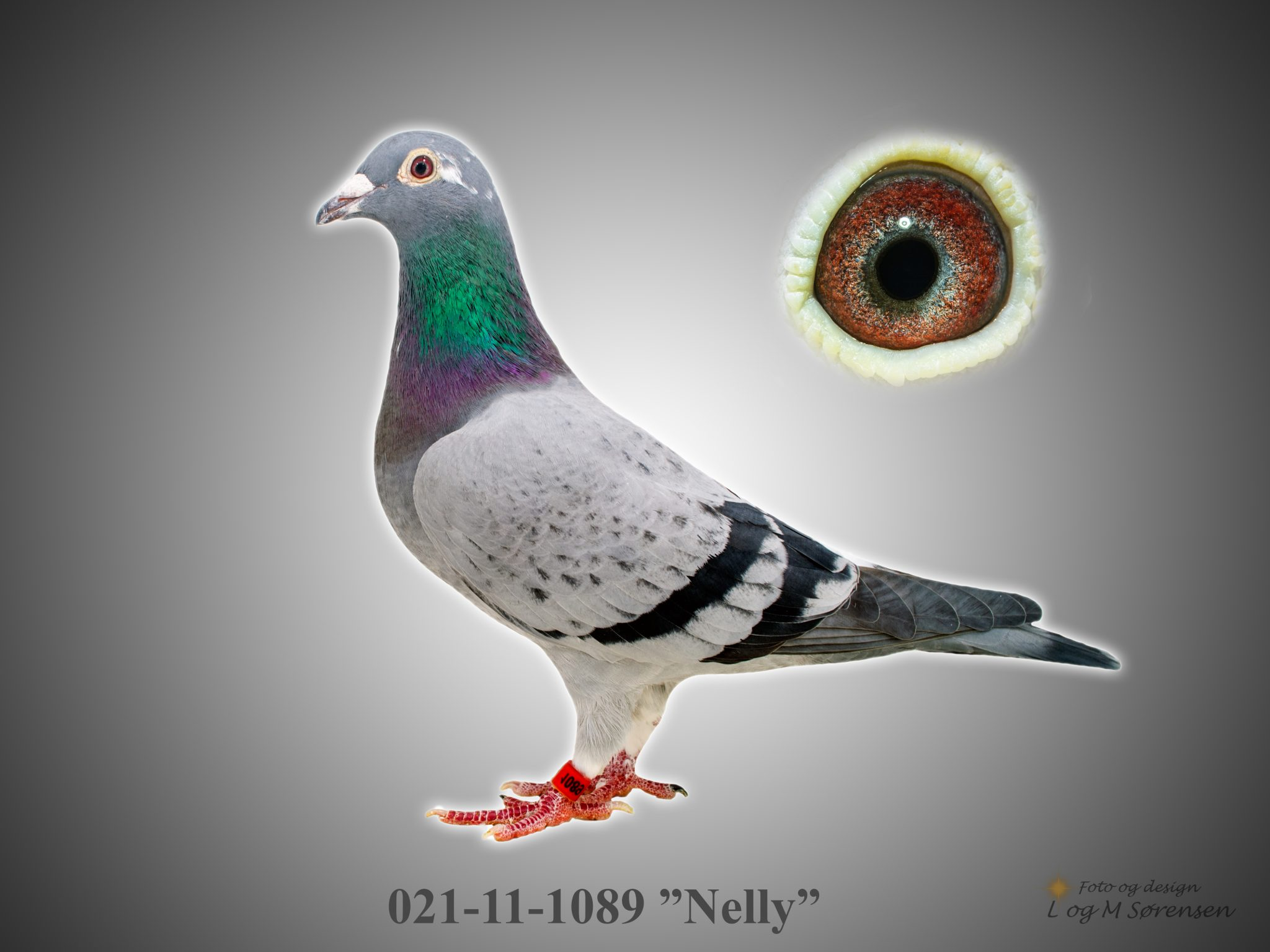 "Rede 11 021-11-1089 ""Nelly"""