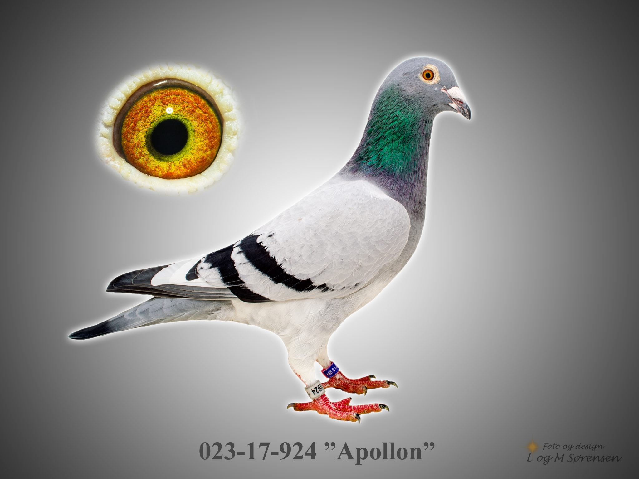 "Rede 7 023-17-924 ""Apollon"""