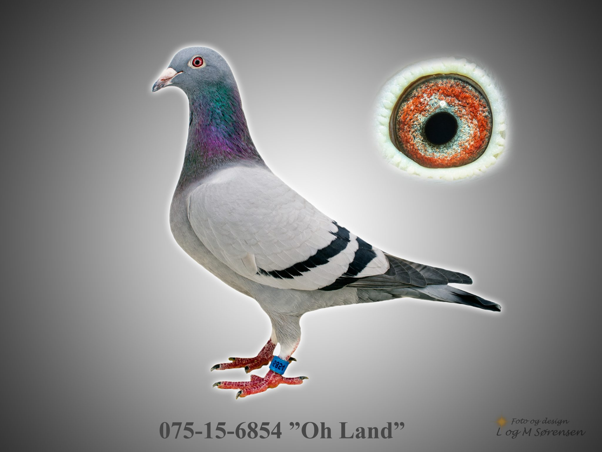 "Rede 9 075-15-6854 ""Oh Land"""