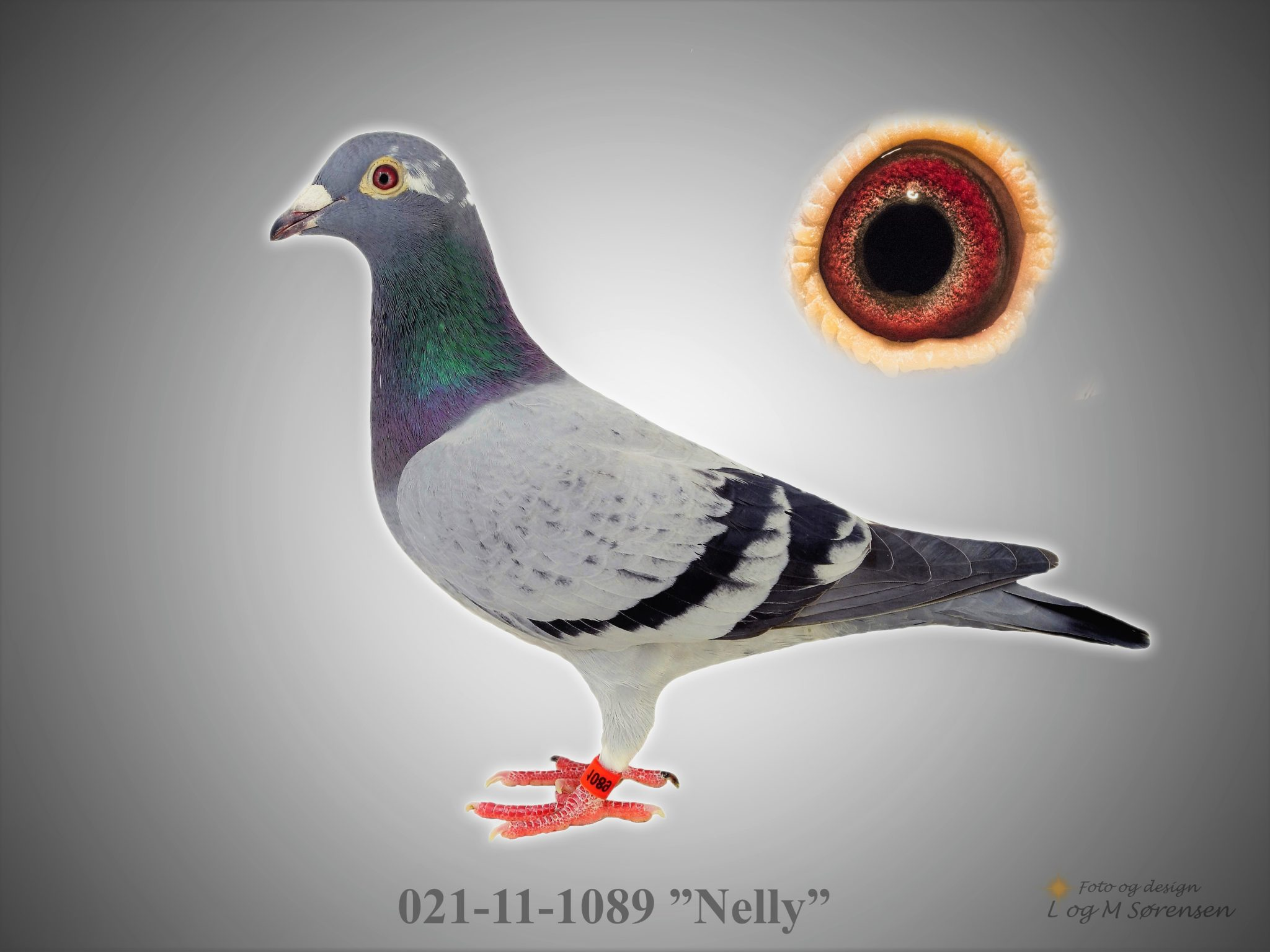 "Rede 15 021-11-1089 ""Nelly"""