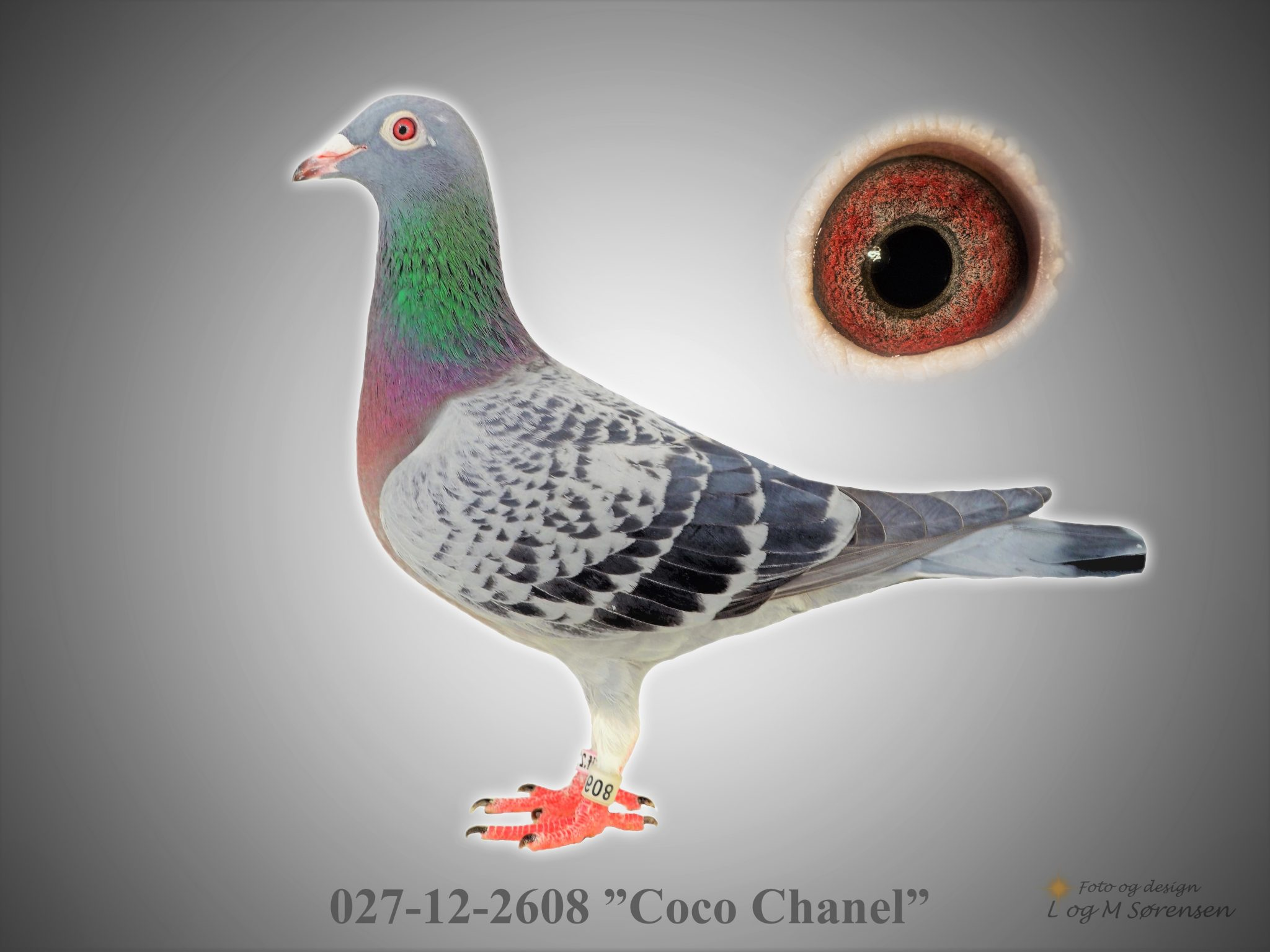"Rede 16 027-12-2608 ""Coco Chanel"""