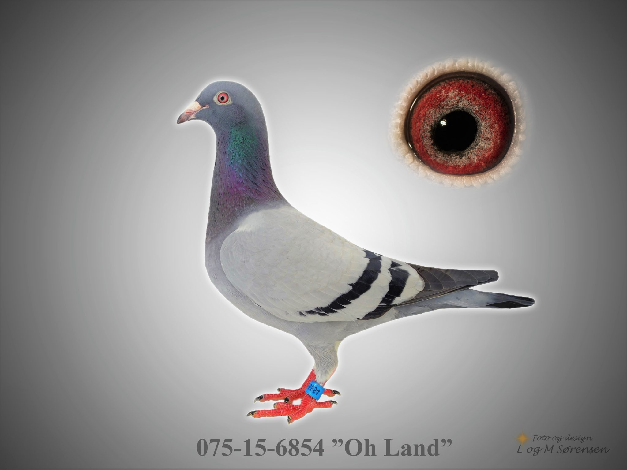 """Rede 19 075-15-6854 """"Oh Land"""""""