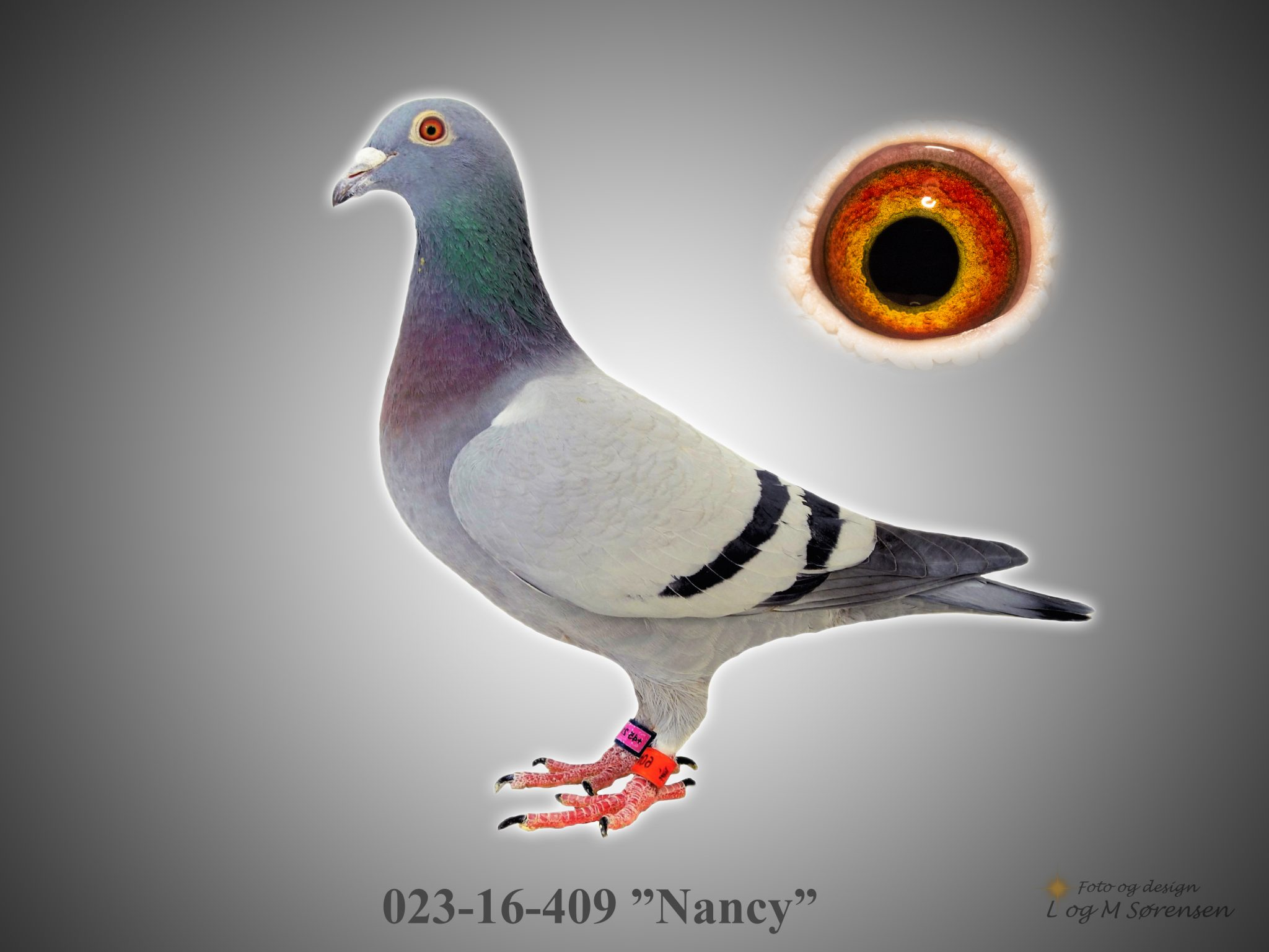 "2. Es-due sprint sek.54 023-16-409 ""Nancy"""