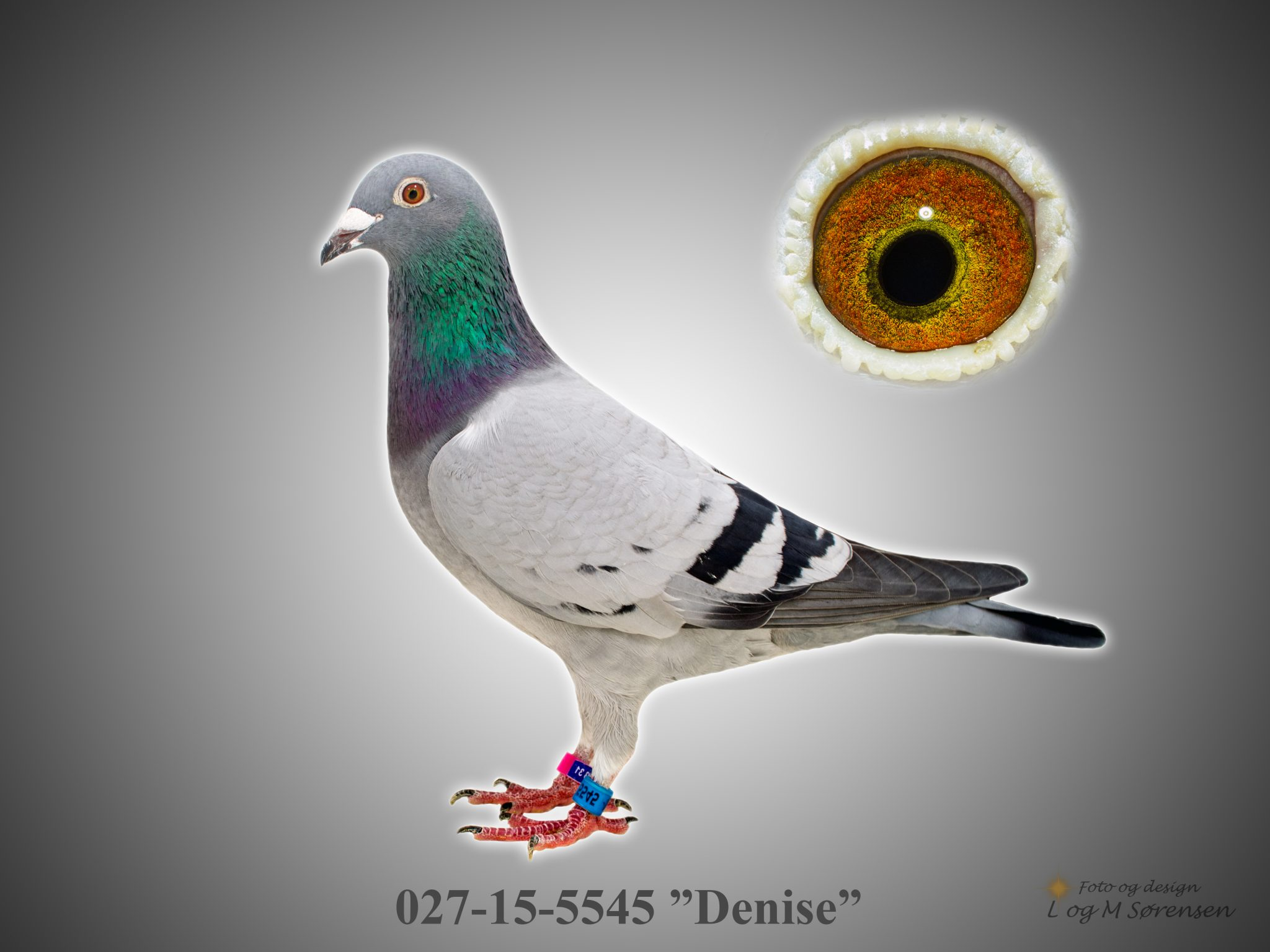 """Rede 17 A 027-15-5545 """"Denise"""""""