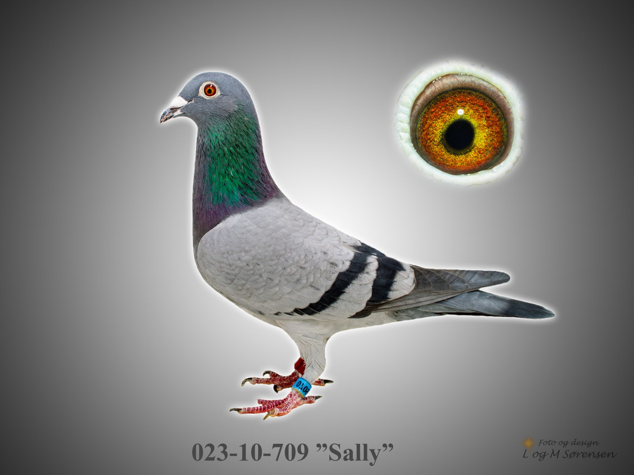 """Rede 23 023-10-709 """"Sally"""""""