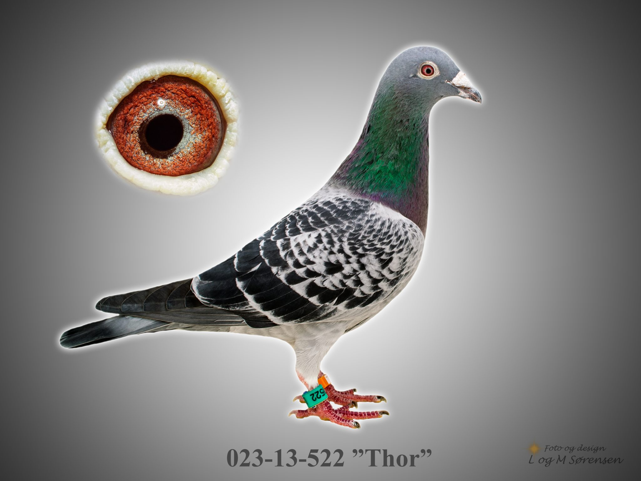 """Rede 9 023-13-522 """"Thor"""""""