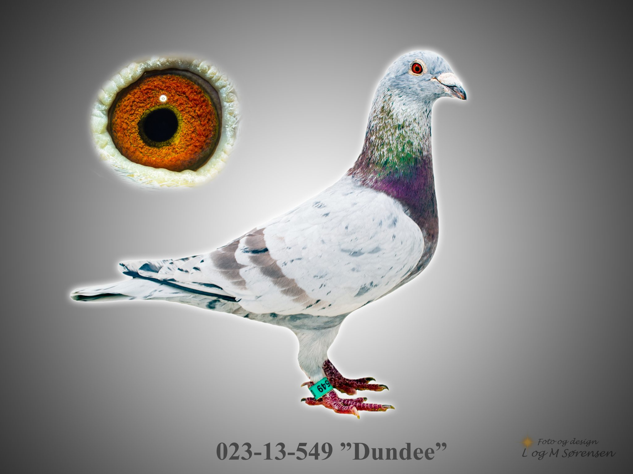 """Rede 3 023-13-549 """"Dundee"""""""