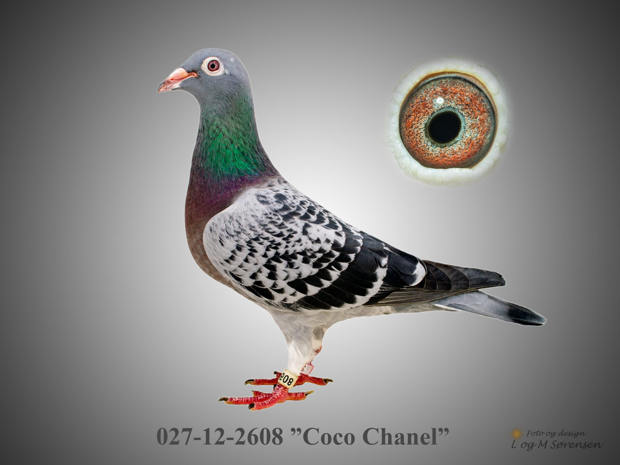 """Rede 21 027-12-2608 """"Coco Chanel"""""""