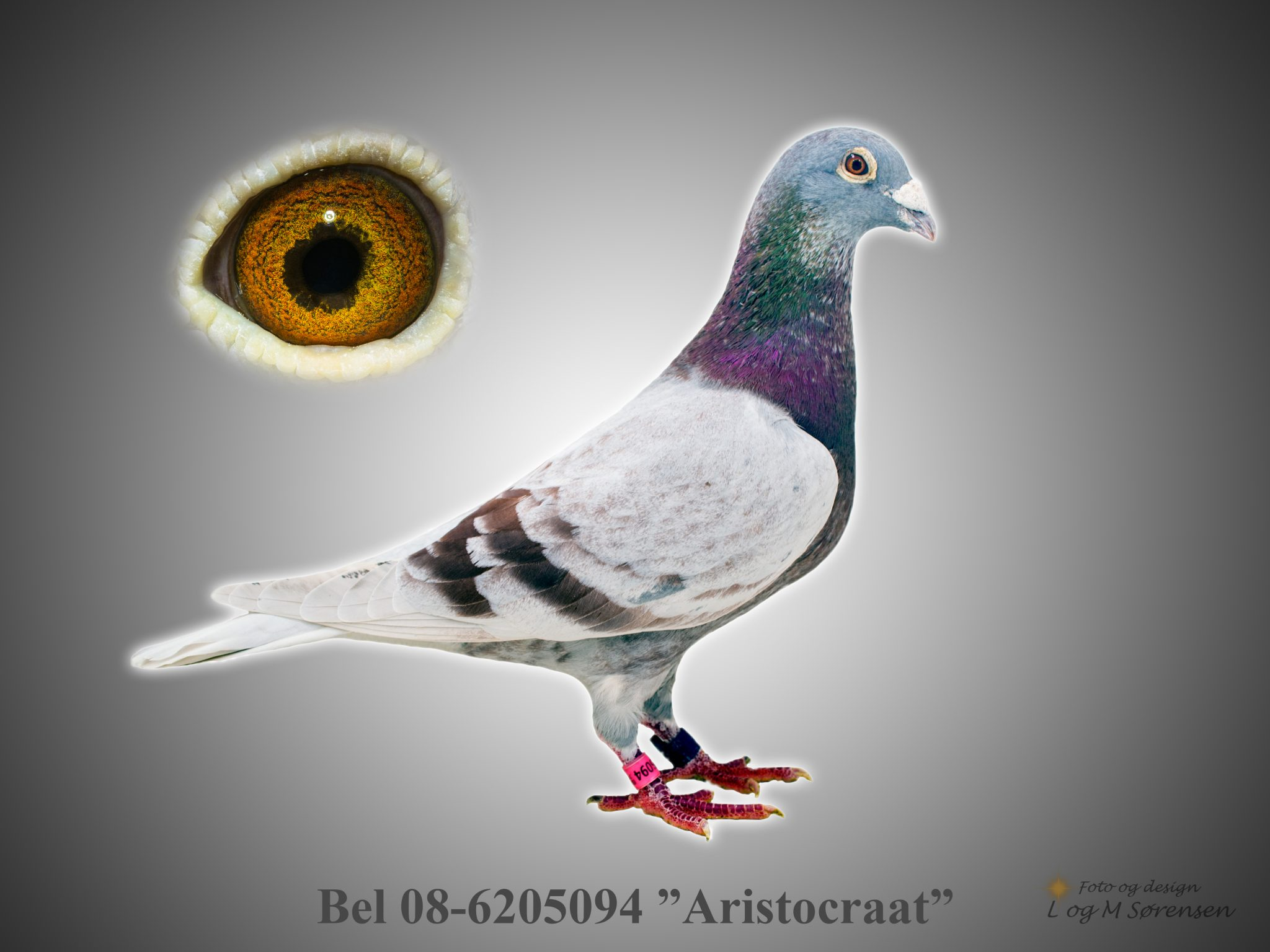"Rede 18 Bel 08-6205094 ""Aristocraat"""
