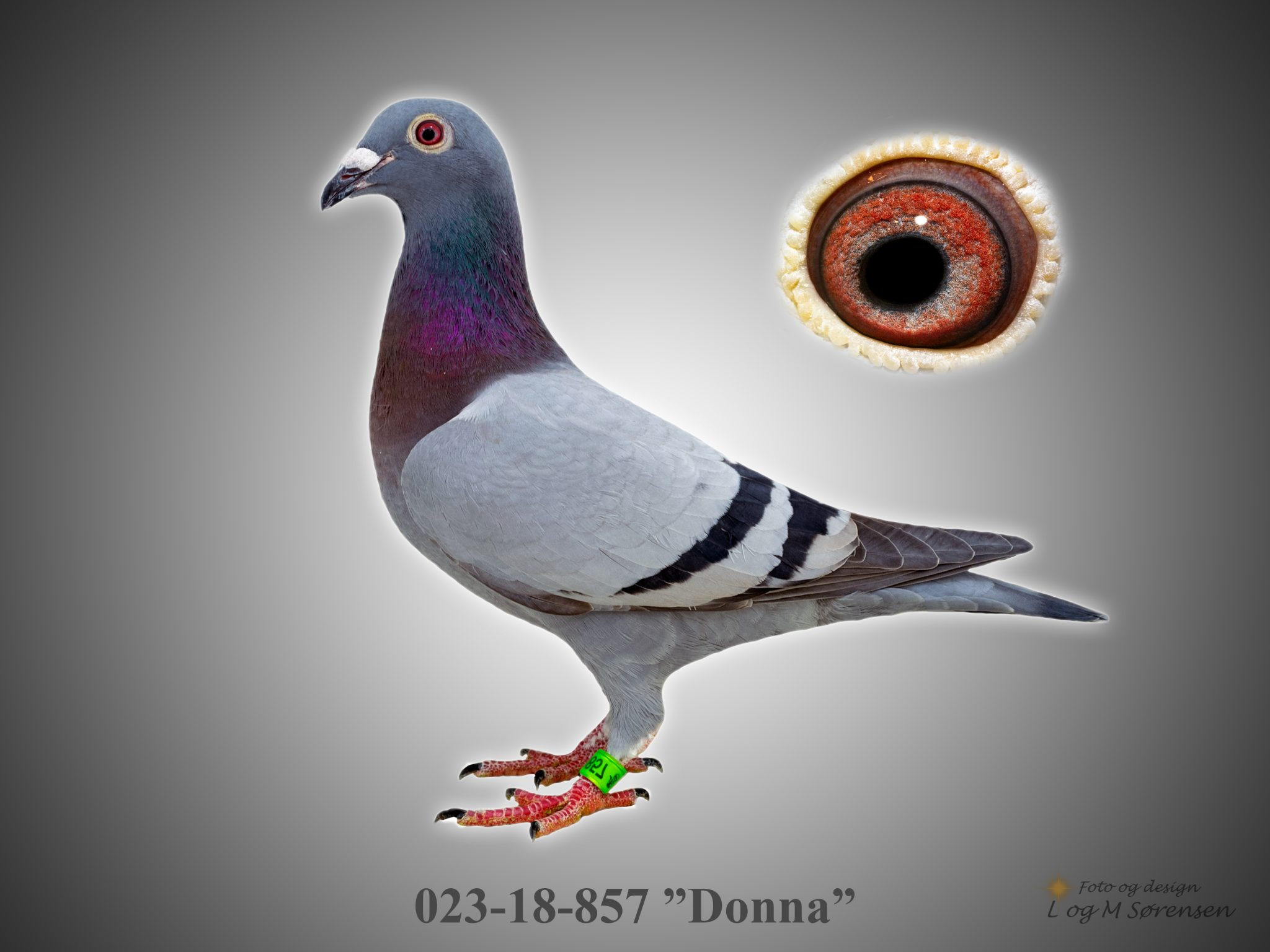 "Rede 10 023-18-857 ""Donna"""