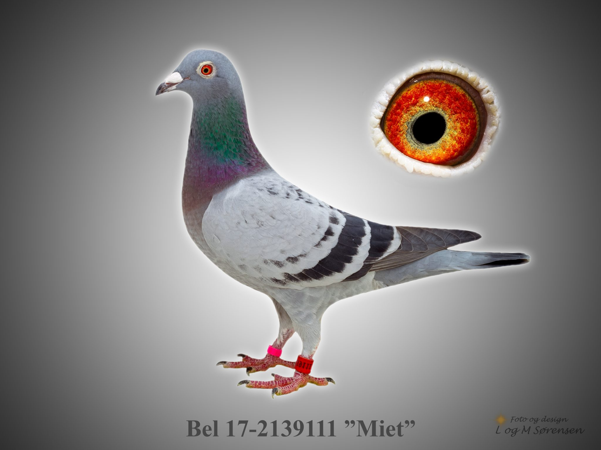 "Rede 3 A Bel 17-2139111 ""Miet"""