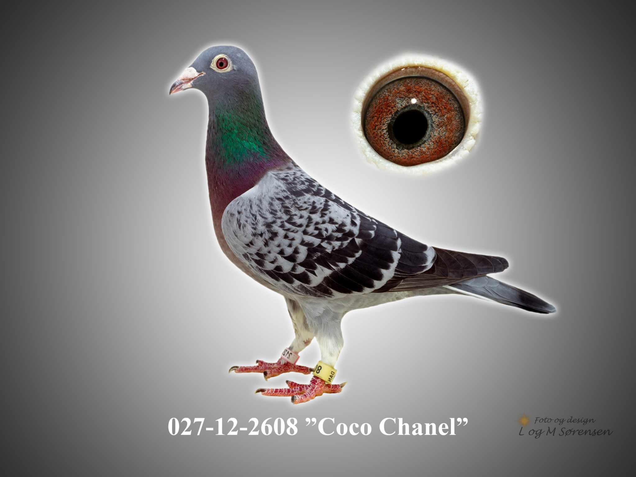"Rede 1 027-12-2608 ""Coco Chanel"""