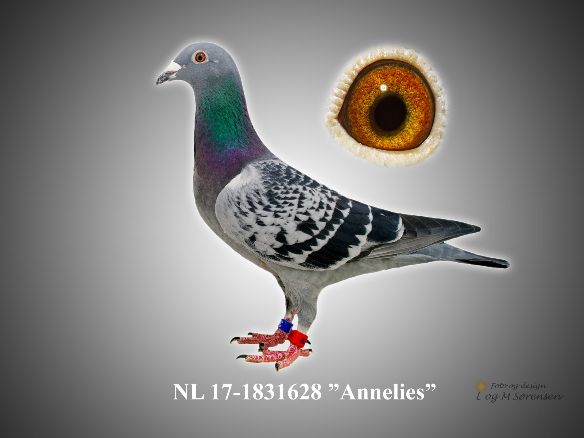 "Rede 21 NL 17-1831628 ""Annelies"""