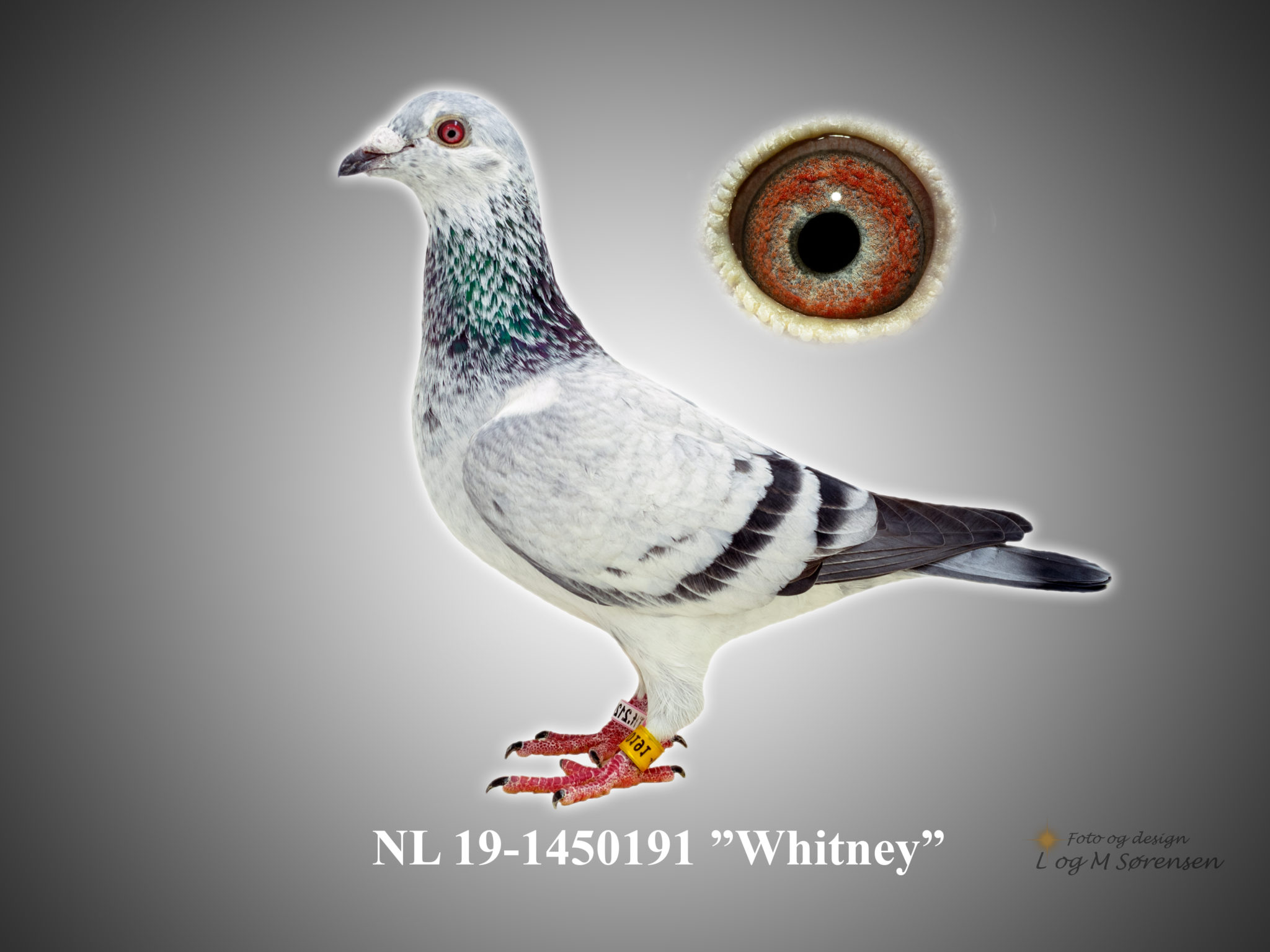 "Rede 6 NL 19-1450191 ""Whitney"""