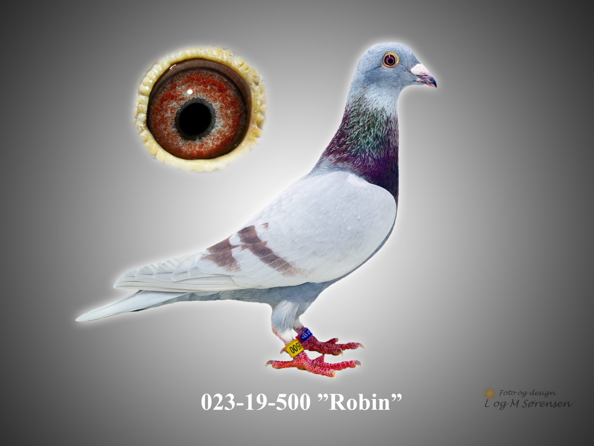 "Rede 9 023-19-500 ""Robin"""
