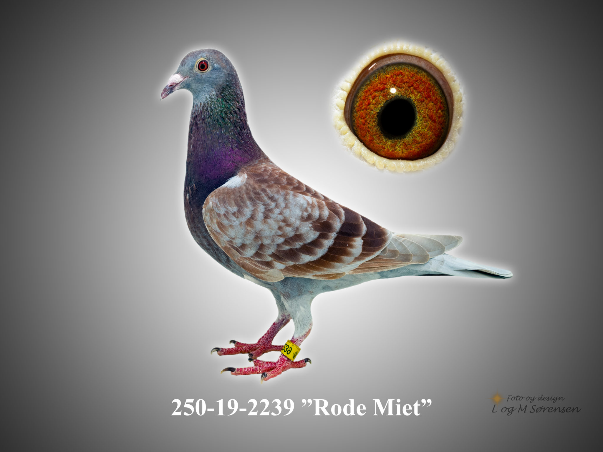 "Rede 27 250-19-2239 ""Rode-Miet"""