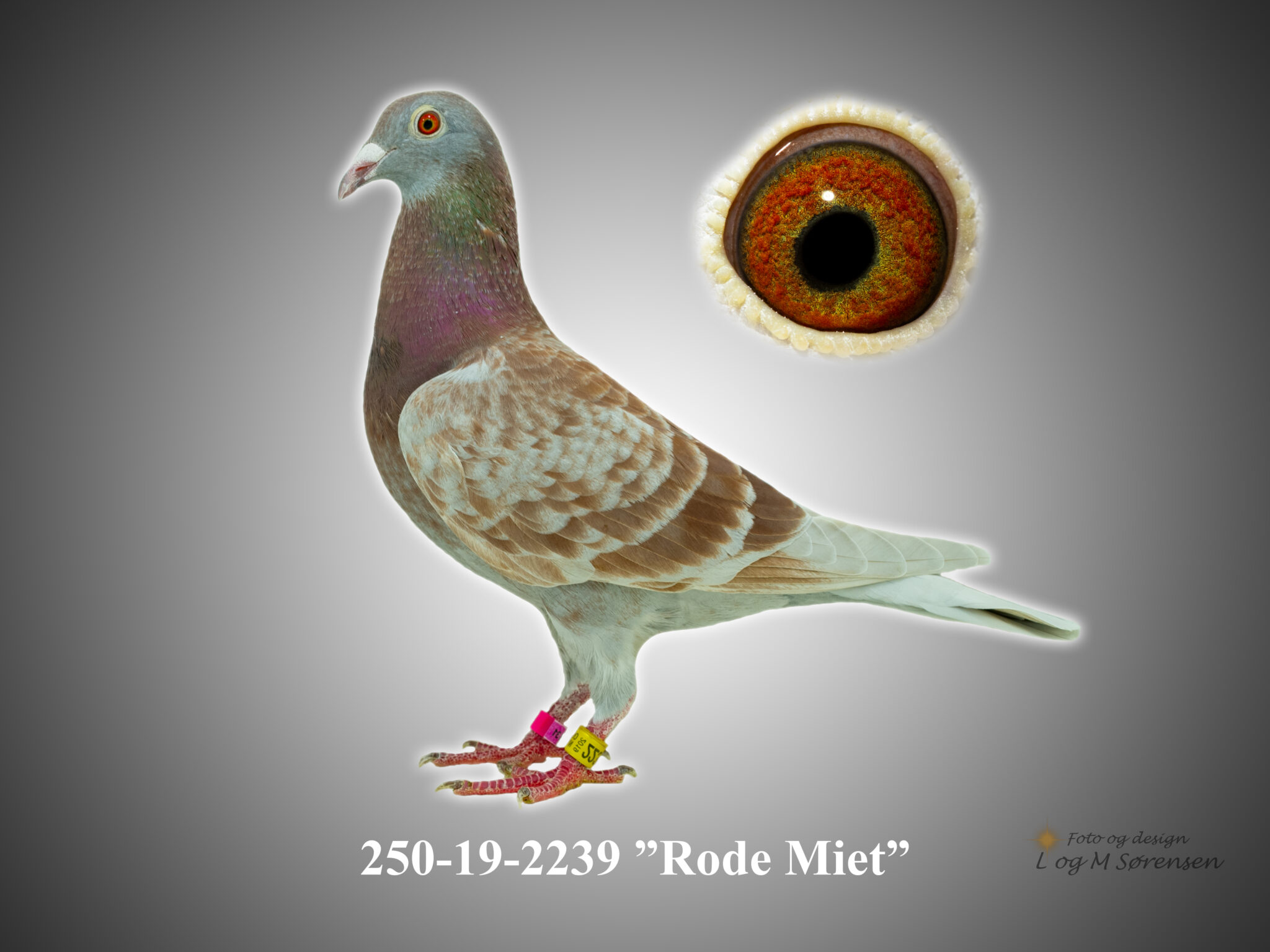 "Rede 4 250-19-2239 ""Rode Miet"""